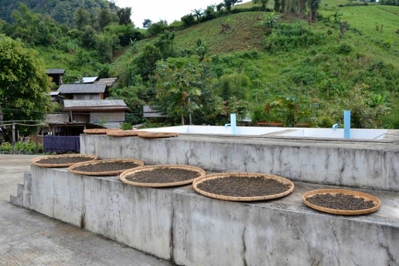 Deutliche Hinweise auf Teeverarbeitung vor der Teefabrik in Pang Kham, Nordthailand