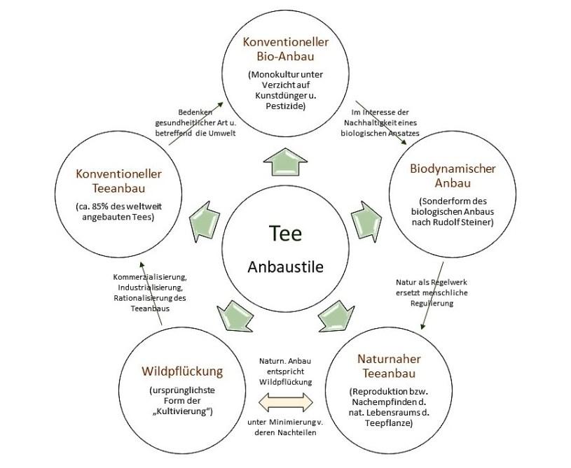 Teeanbau - Klassifikation 5 Anbaustile