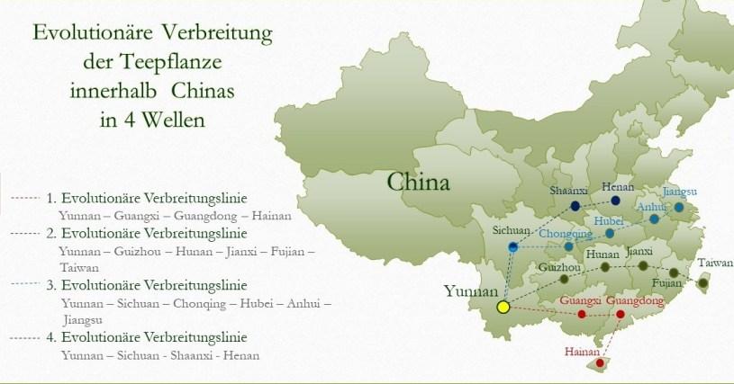 Evolutionäre Verbreitung der Teepflanze in (Süd-) China - Karte