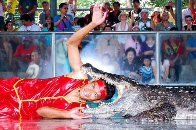 Crocodile show in Pattaya
