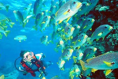 Кораллы Пхукет thaichata.ru