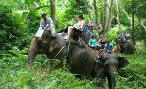 Elephent trekking Phuket