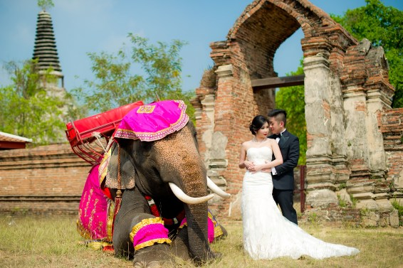 Cherlyn and Ben's Ayutthaya Elephant Village pre-wedding (prenuptial, engagement session) in Ayutthaya, Thailand. Ayutthaya Elephant Village_Ayutthaya_wedding_photographer_Cherlyn and Ben_2197.TIF