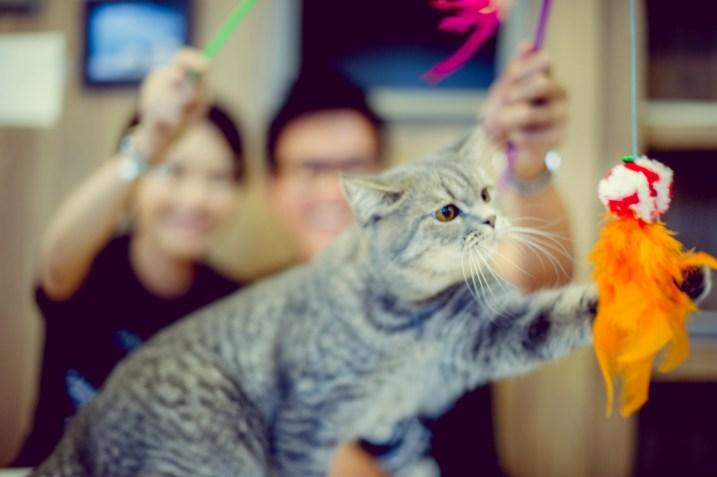 Si'En and Lai's Caturday Cat Cafe pre-wedding (prenuptial, engagement session) in Bangkok, Thailand. Caturday Cat Cafe_Bangkok_wedding_photographer_Si'En and Lai_0239.TIF