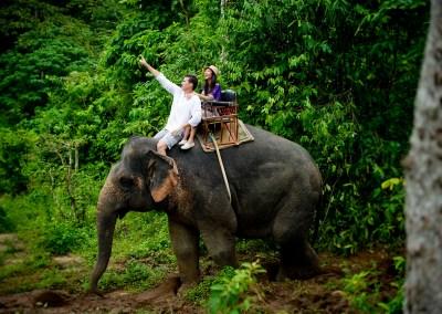 Nosey Parker's Elephant Camp