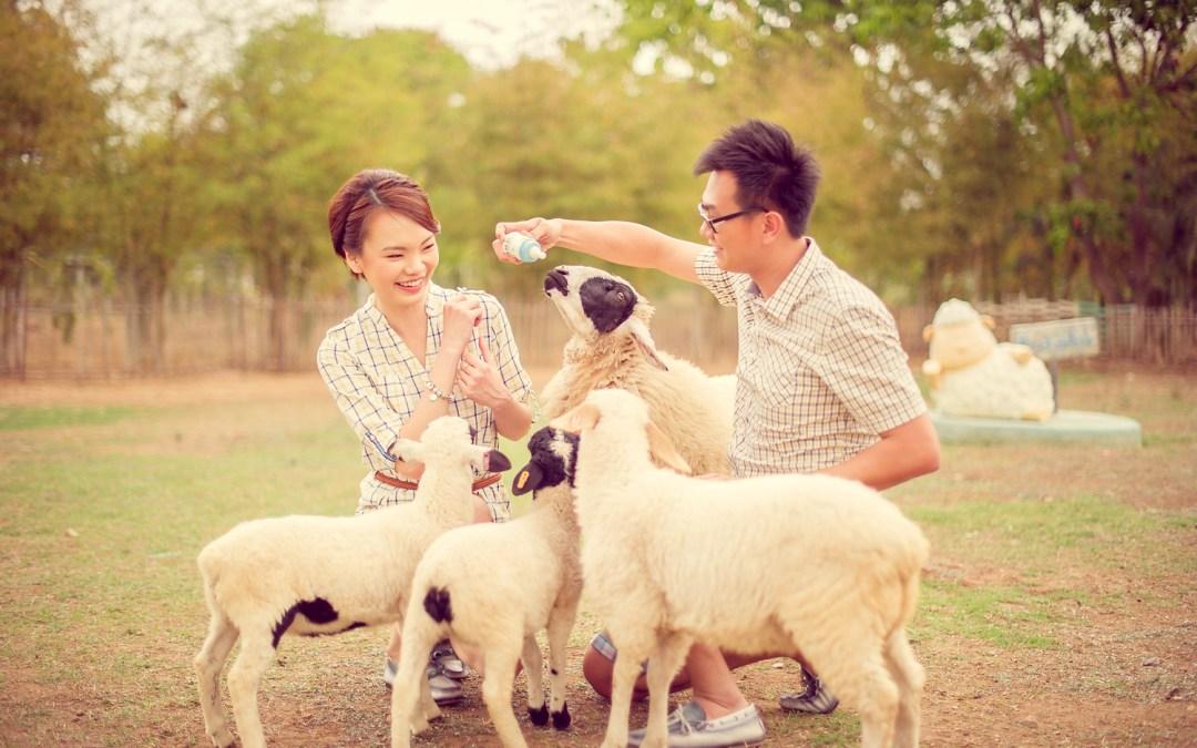 Sheep Land Khao Yai