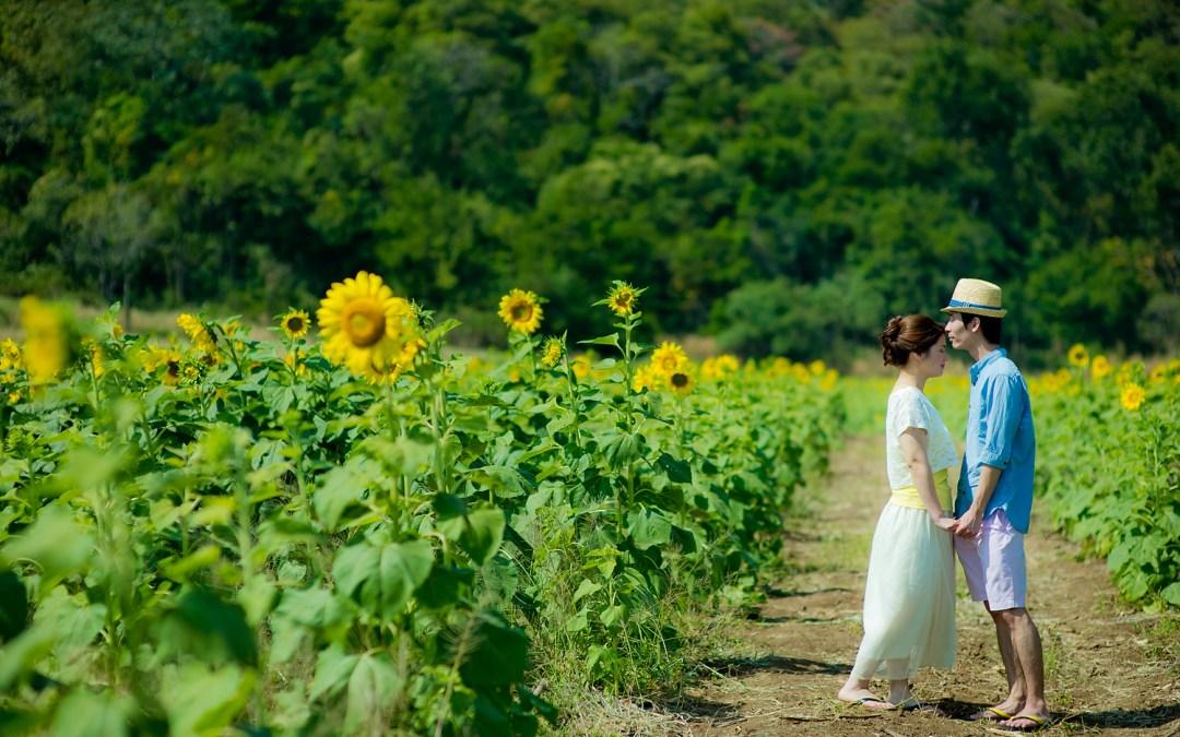 Photo of the Day: Sunflower Field Saraburi Pre-Wedding