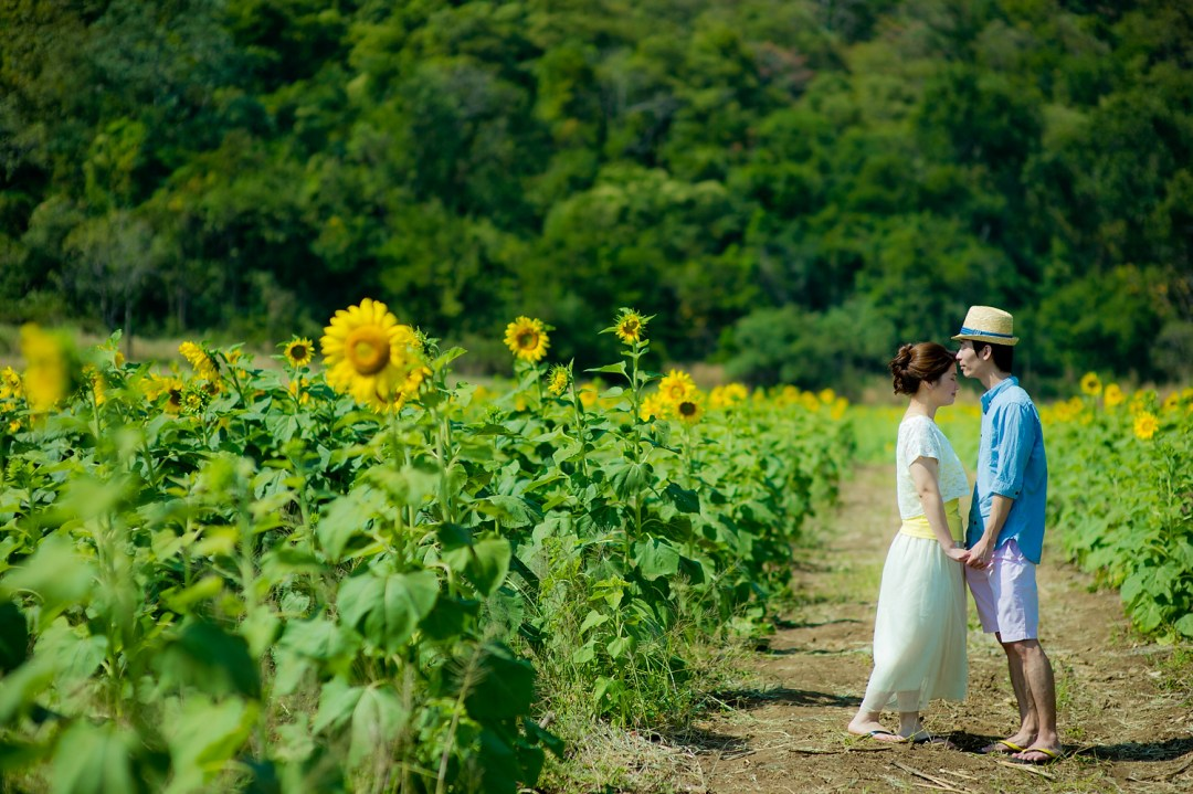 Sunflower Pre-Wedding | Thailand Saraburi Pre-Wedding Photography