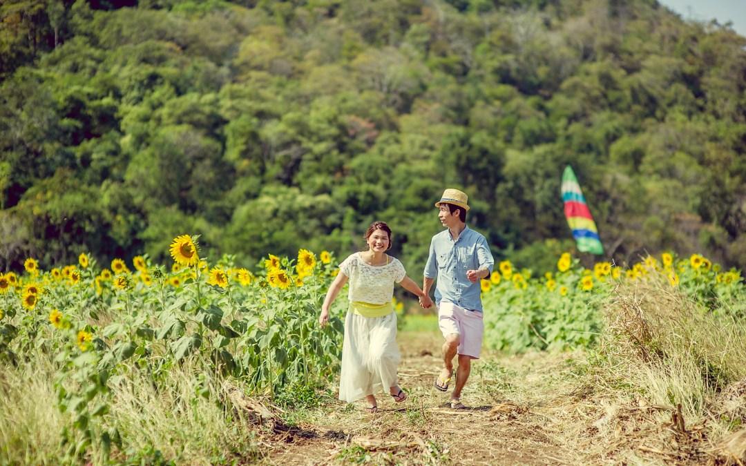 Sunflower Field Saraburi