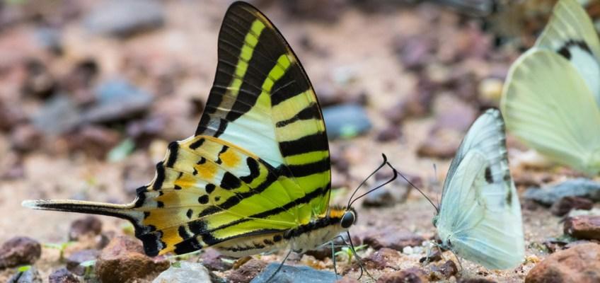 Pang Sida National Park , Sakaeo สระแก้ว