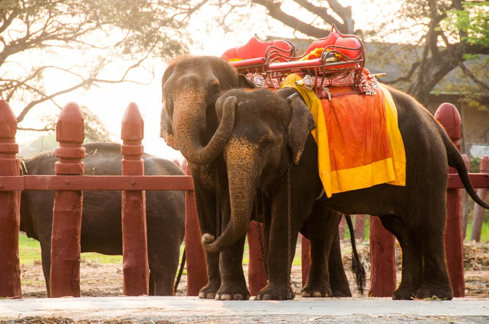วังช้างแลเพนียด (Wang Chang Lae Phaniat)