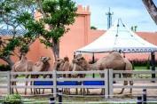 camelrepublic2
