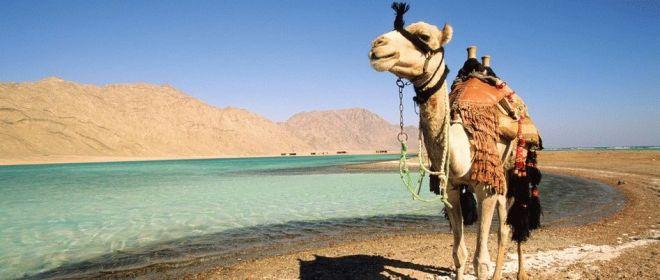 Когда лучше отдыхать в Египте
