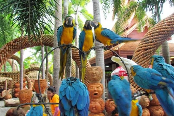 Тропический парк Нонг Нуч - Сад птиц