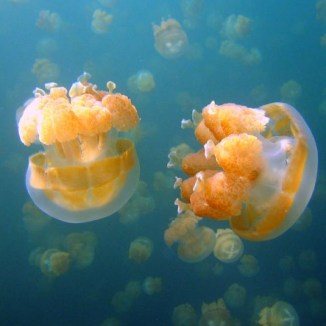 крошечные медузы