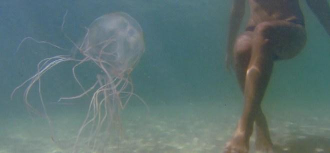 Медузы во Вьетнаме