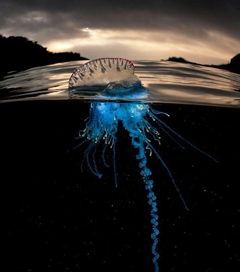 медузы во вьетнаме2