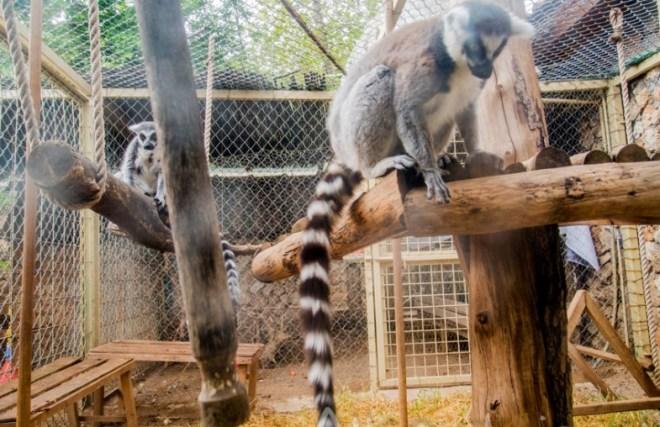 зоопарк Mini-zoo Кемер