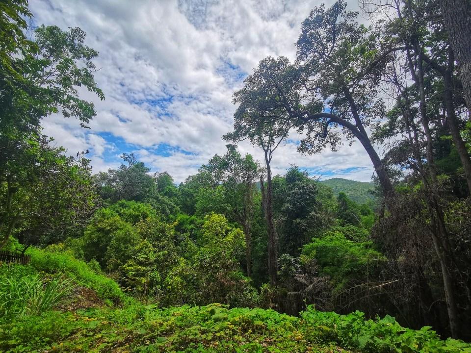 Views Sticky Waterfall area Mae Kaeng