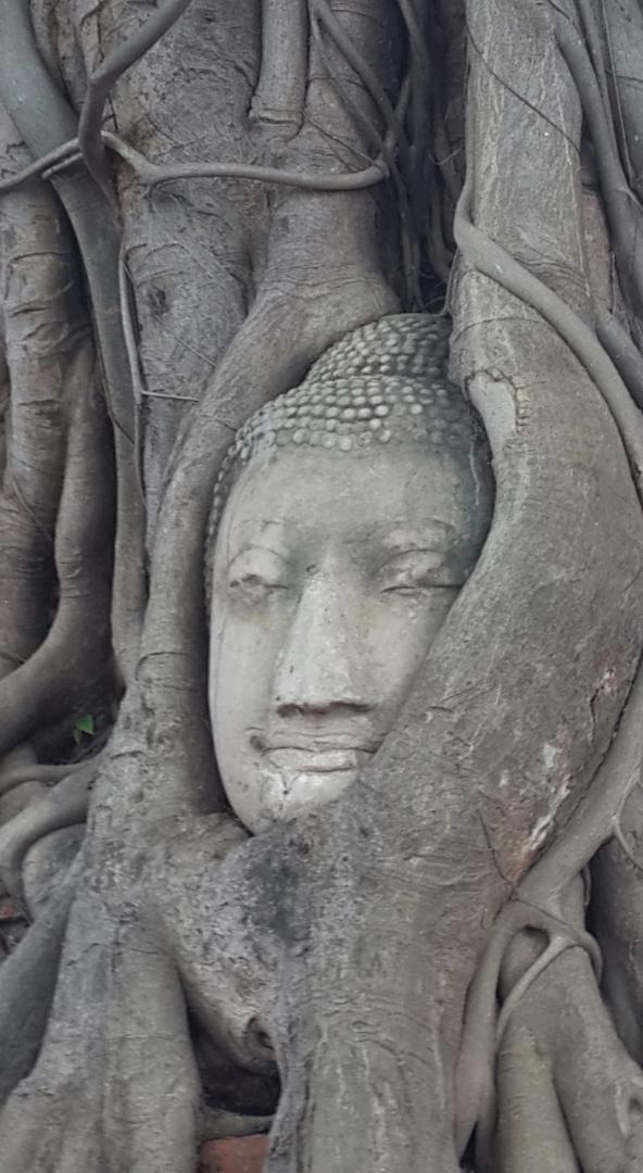 The Buddha head in Ayutthayas Wat Mahatat.