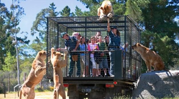 ประสบการณ์เร้าใจที่ Orana Wildlife Park