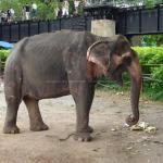 象乗り体験(カンチャナブリー)