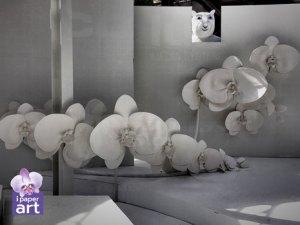 ดอกไม้กระดาษ กล้วยไม้ ฟาแลนด์