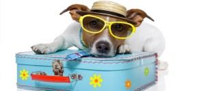 cachorro-raca-viajar-com-seu-pet2