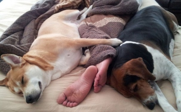 dogs-in-bed-808x500-671x415