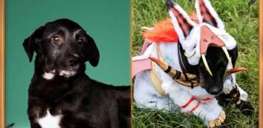 HearthStone | Cães Abandonados Transformados em Loas? (Campanha)