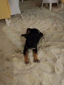 Dog on a beach Koh Samet