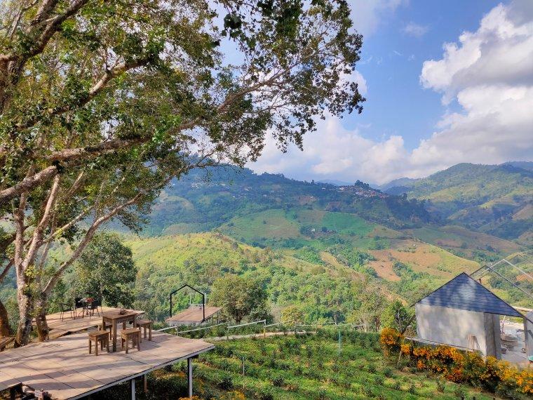 Mae Salong Loop Wang Put Tan tea plantation
