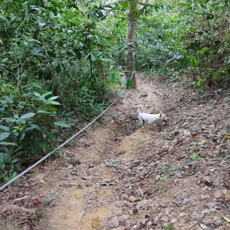 koh mook koh muk jungle trail