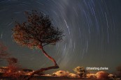 I love this image, more than the baobabs, because of the pose of this tree