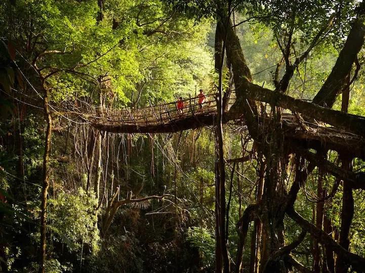 treerootbridge04