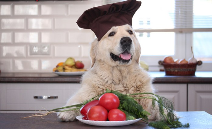Can Dogs Eat Tomatoes? - Are Tomatoes Poisonous For Dogs?