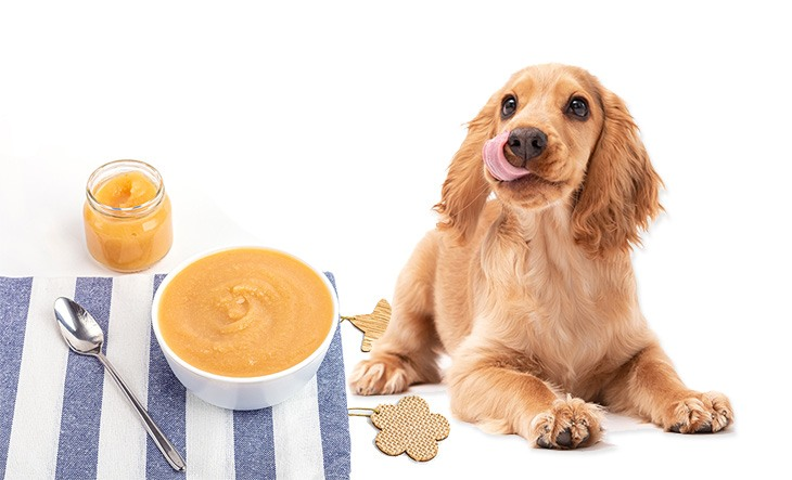 Can Dogs Eat Applesauce? - Revealing the Answers