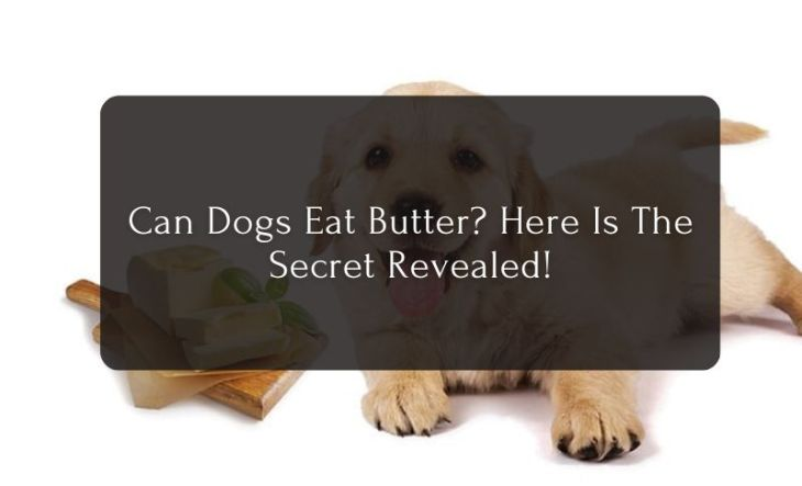 Can Dogs Eat Butter? - Here Is The Secret Revealed