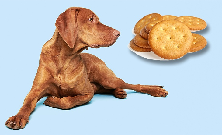 Dog and Cracker