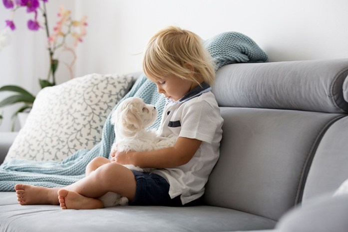 Child playing with white puppy maltese dog at home