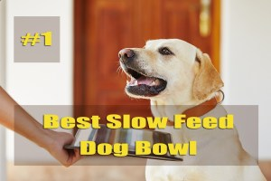 Best Slow Feed Dog Bowl Reviews and Buying Guide