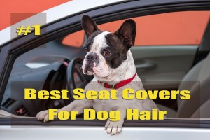The Best Seat Covers For Dog Hair To Always Keep Your Vehicles Clean