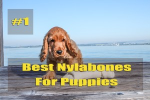 What Are The Best Nylabones For Puppies - Your Beloved Pet