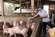 Bộ Nông nghiệp yêu cầu các địa phương kiểm soát giá thịt lợn