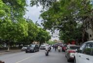 Thực hiện ngay việc kiểm tra, rà soát và xử lý cây xanh nguy hiểm trên địa bàn thành phố
