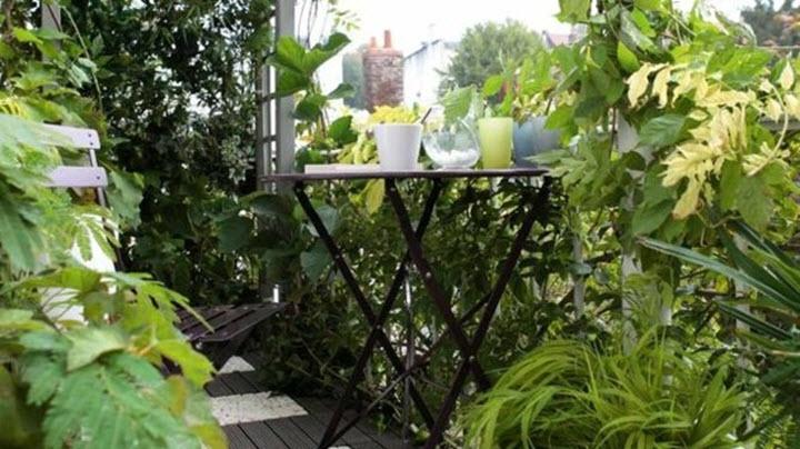 jungla din balcon