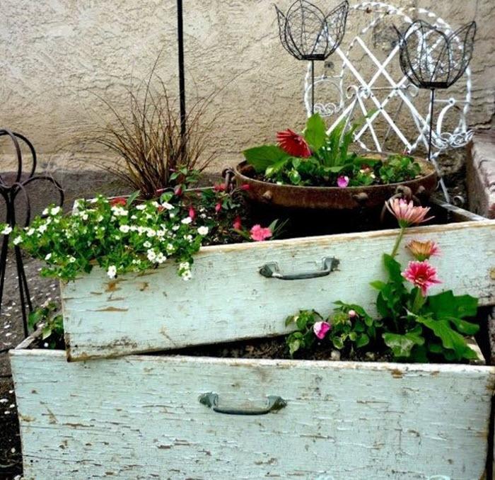 rasaduri de flori in sertare vechi din lemn