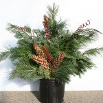 """Spruce up"" by pruning boughs from evergreens to make porch pots"