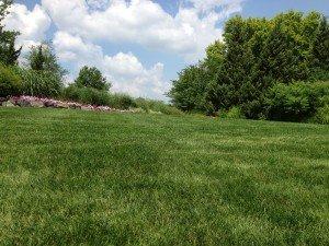 Our Backyard Oasis awaits