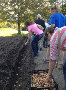 Bulb planting time!